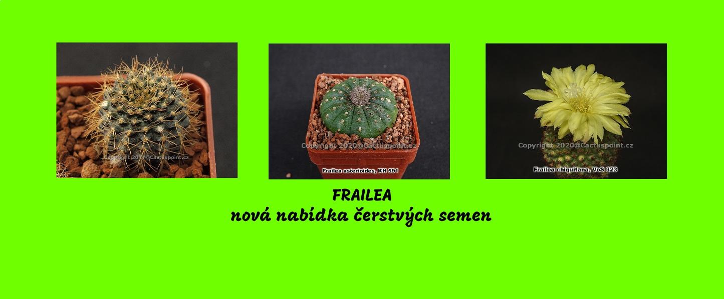 frailea1