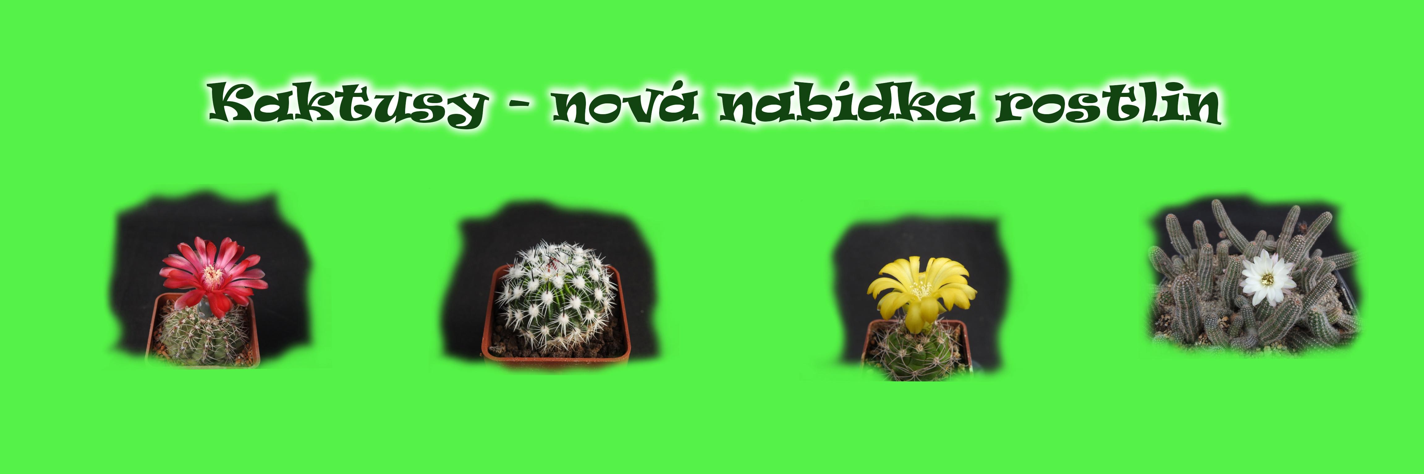 kaktusy---nov-nabdka-rostlin1
