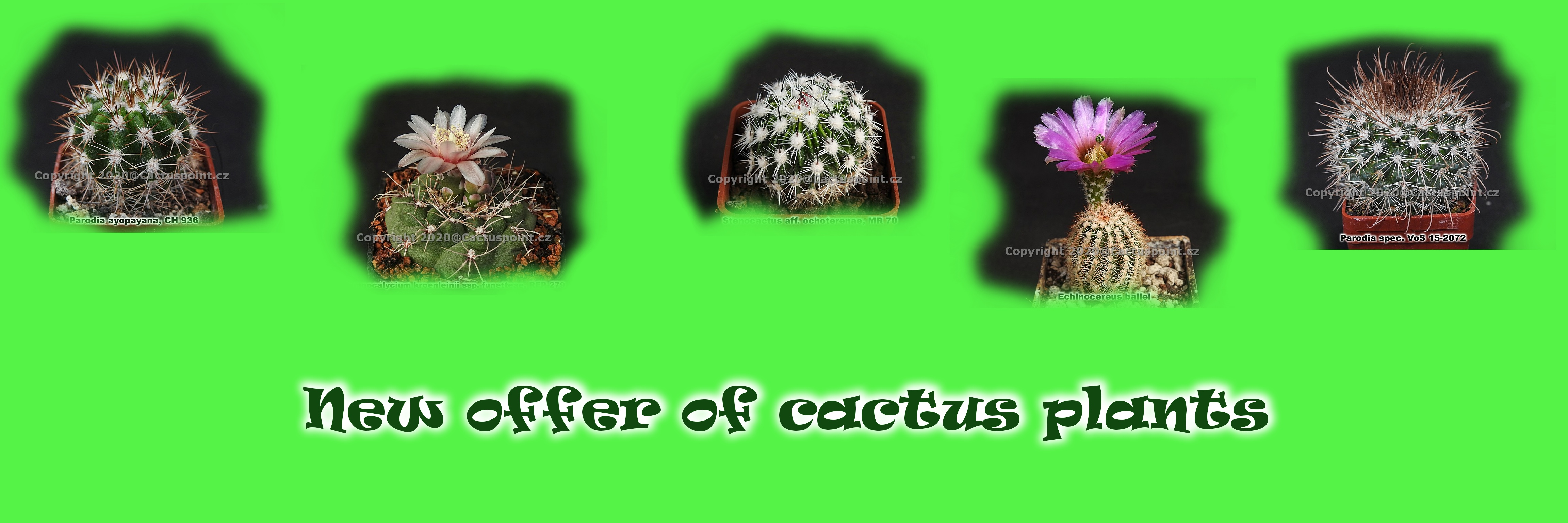 new-offer-of-cactus-plants