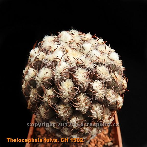 thumb product1